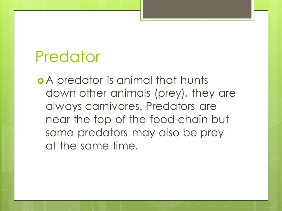 Predator  A predator is animal that hunts down other animals (prey), they are always carnivores.