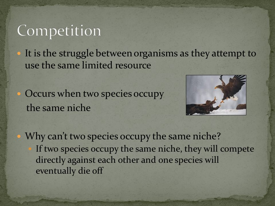 It is the struggle between organisms as they attempt to use the same limited resource Occurs when two species occupy the same niche Why can't two spec
