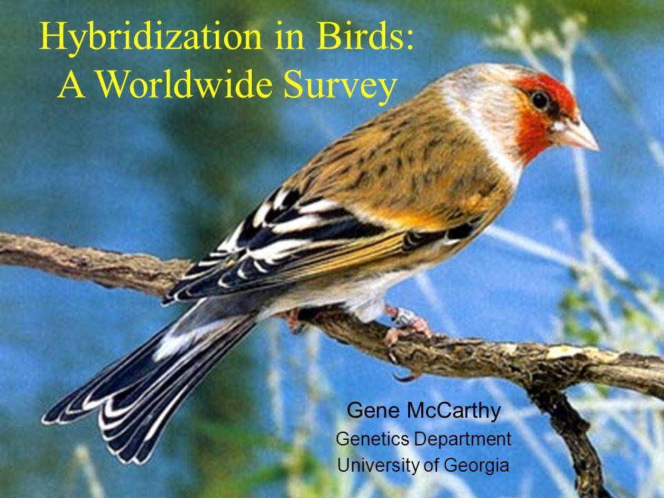 Hybridization in Birds: A Worldwide Survey Gene McCarthy Genetics Department University of Georgia