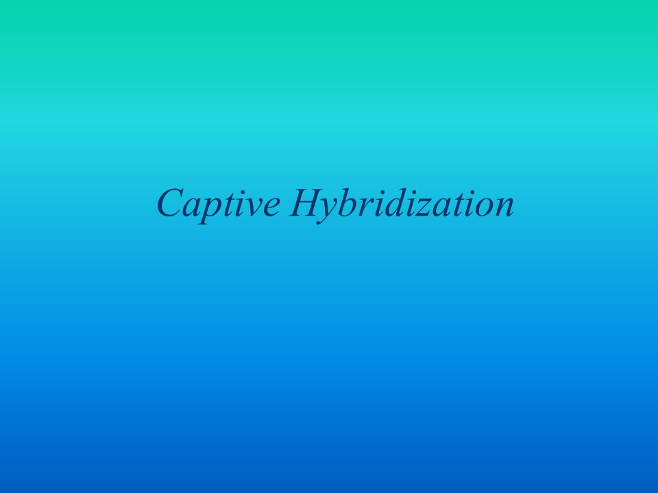 Captive Hybridization