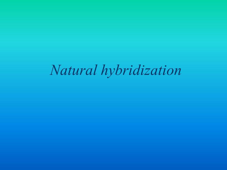 Natural hybridization