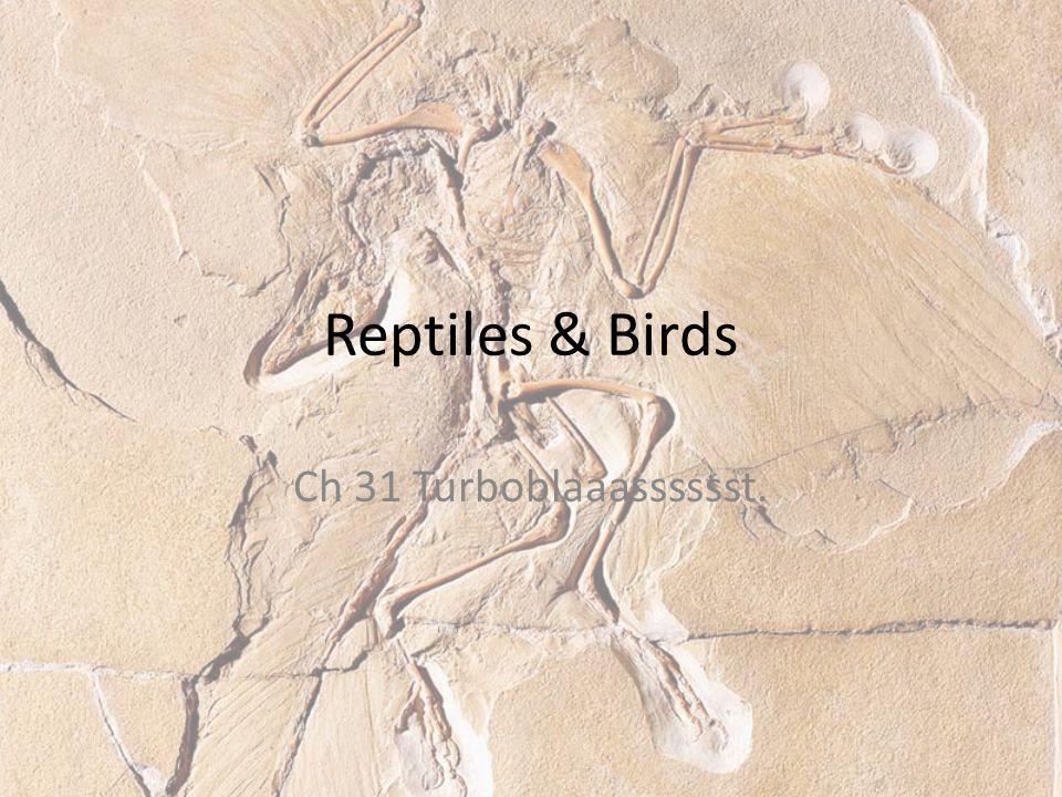 Reptiles & Birds Ch 31 Turboblaaasssssst.