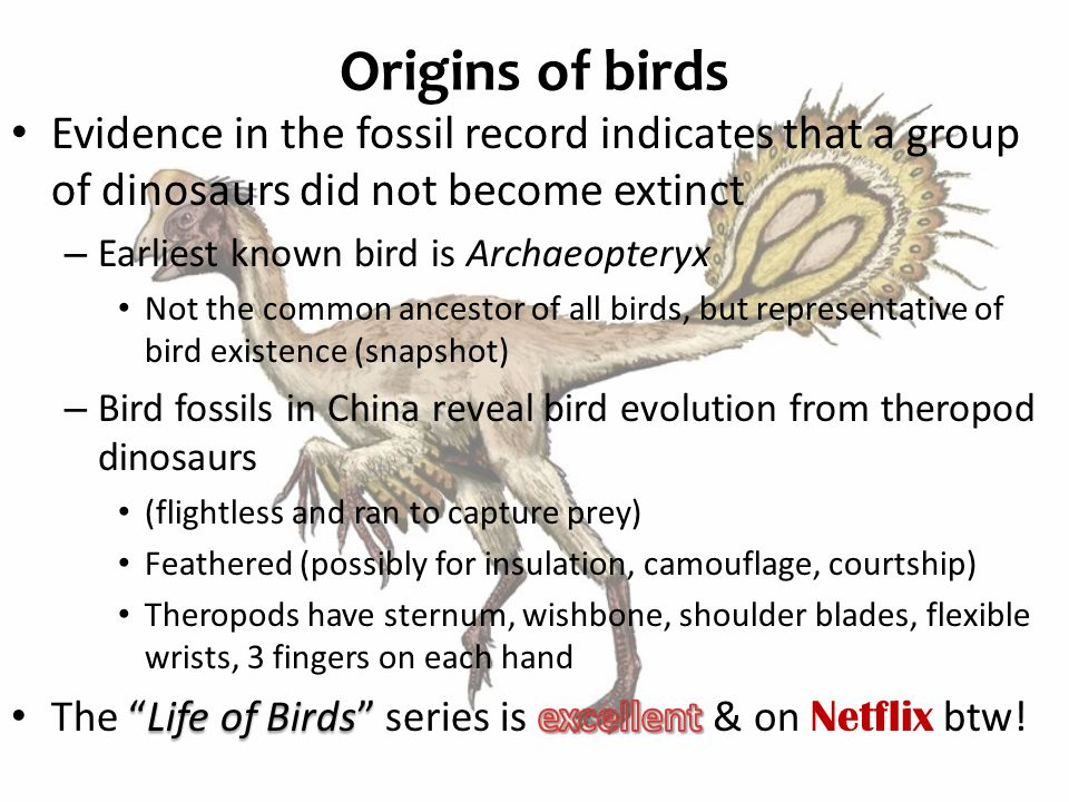 Origins of birds