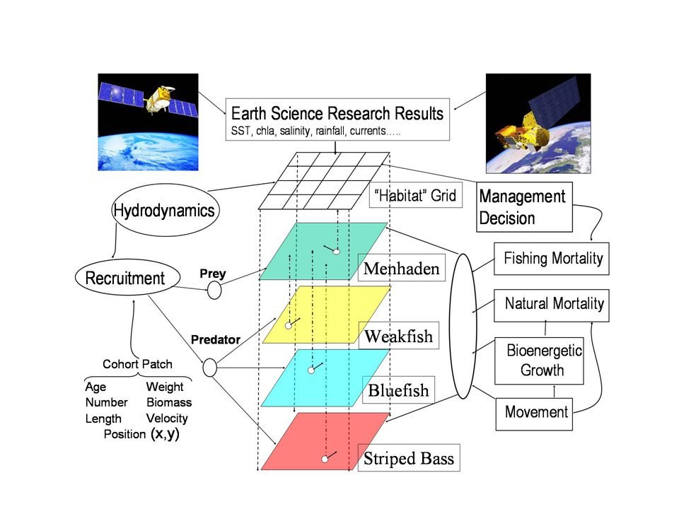 Atlantic Coast Ecosystem Simulation (ACES) Model