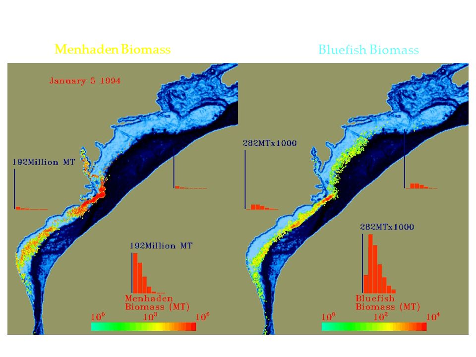 ACES Model simulations Menhaden Biomass Bluefish Biomass