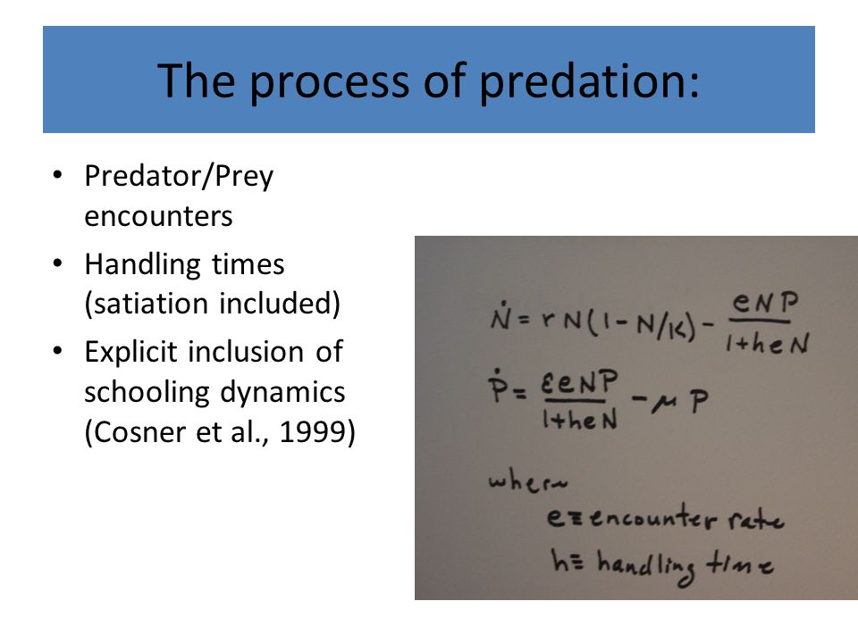 The process of predation: Predator/Prey encounters Handling times (satiation included) Explicit inclusion of schooling dynamics (Cosner et al., 1999)