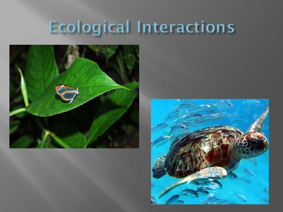  Ecology is the interactions between various organisms and their environments.