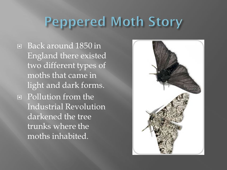  Back around 1850 in England there existed two different types of moths that came in light and dark forms.  Pollution from the Industrial Revolution