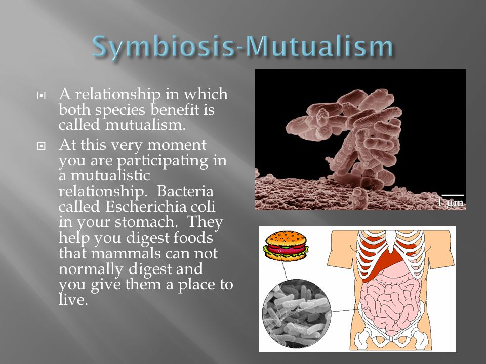  A relationship in which both species benefit is called mutualism.  At this very moment you are participating in a mutualistic relationship. Bacteri