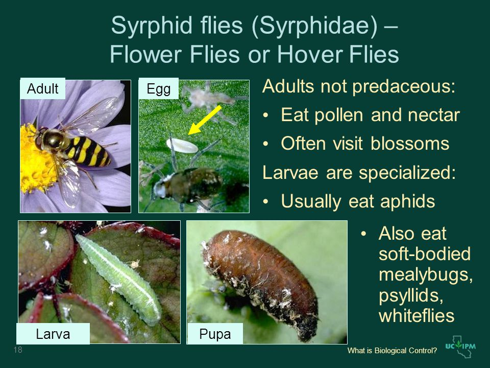 What is Biological Control.