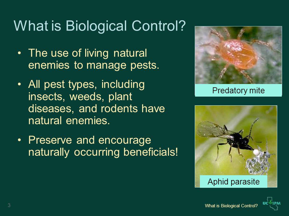 What is Biological Control. The use of living natural enemies to manage pests.