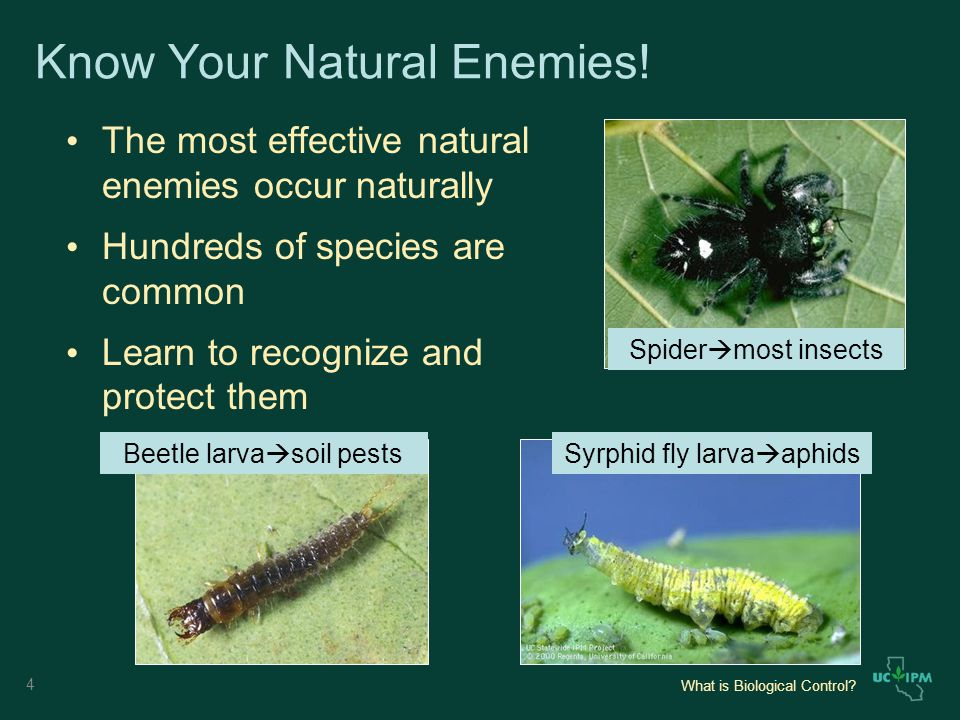 What is Biological Control. Know Your Natural Enemies.
