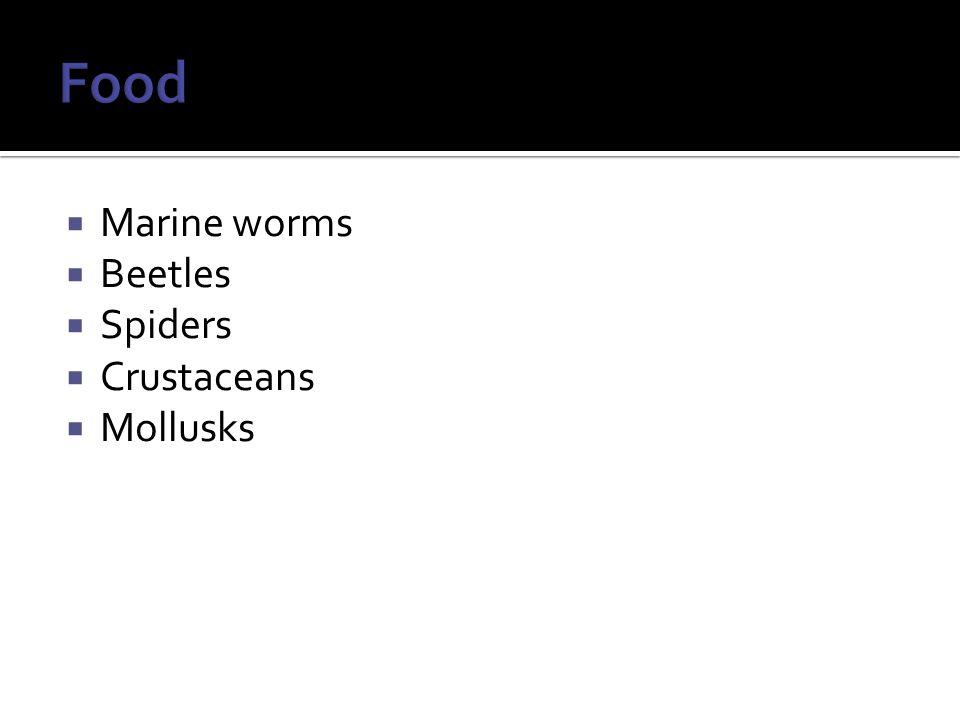  Marine worms  Beetles  Spiders  Crustaceans  Mollusks
