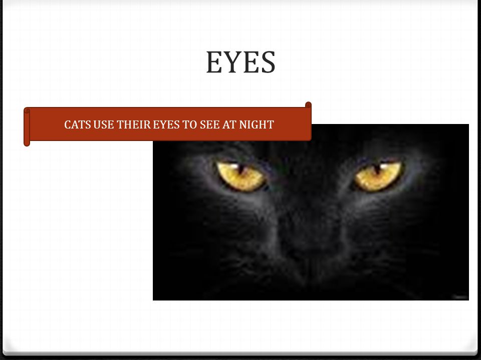 EYES CATS USE THEIR EYES TO SEE AT NIGHT