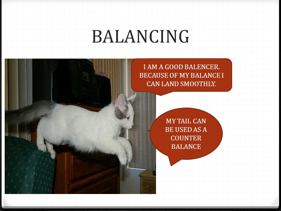 BALANCING I AM A GOOD BALENCER. BECAUSE OF MY BALANCE I CAN LAND SMOOTHLY.