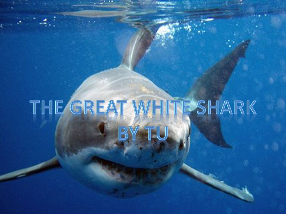 Change The great white shark was added to the endangered list because its population has dropped due to the unregulated trade and excessive hunting.