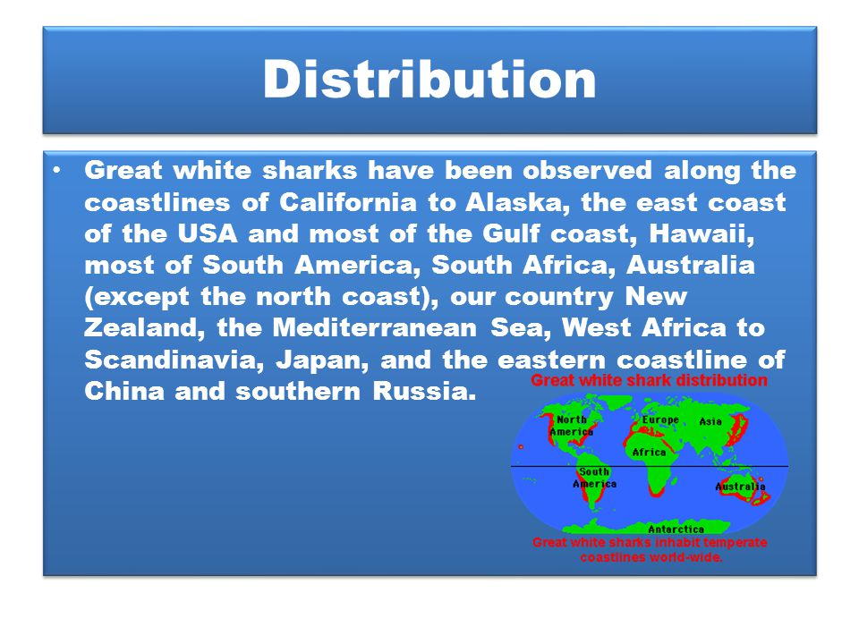 Distribution Great white sharks have been observed along the coastlines of California to Alaska, the east coast of the USA and most of the Gulf coast,