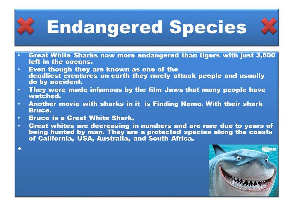 Endangered Species Great White Sharks now more endangered than tigers with just 3,500 left in the oceans. Even though they are known as one of the dea