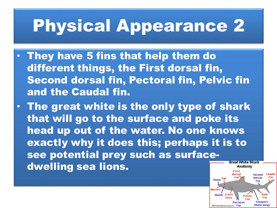 Physical Appearance 2 They have 5 fins that help them do different things, the First dorsal fin, Second dorsal fin, Pectoral fin, Pelvic fin and the C