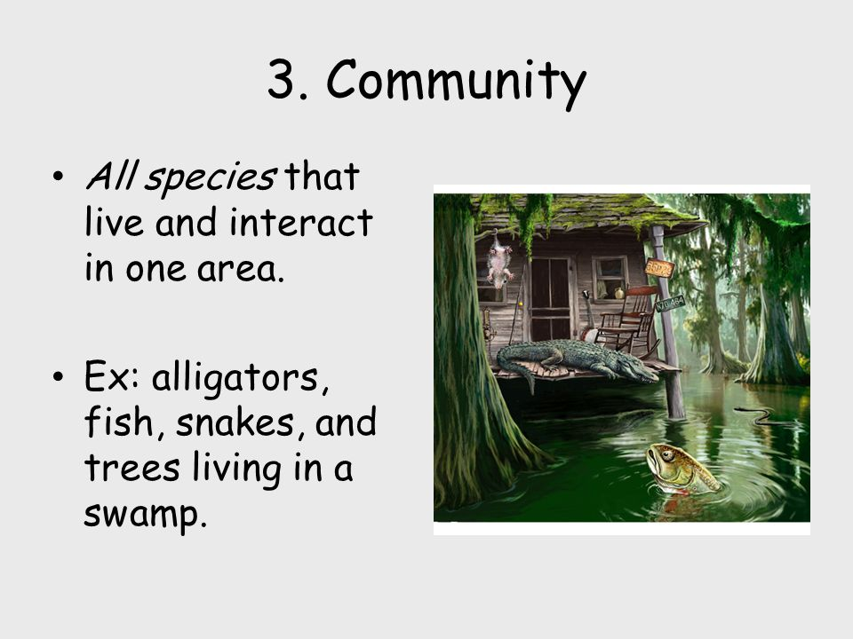 3.Community All species that live and interact in one area.