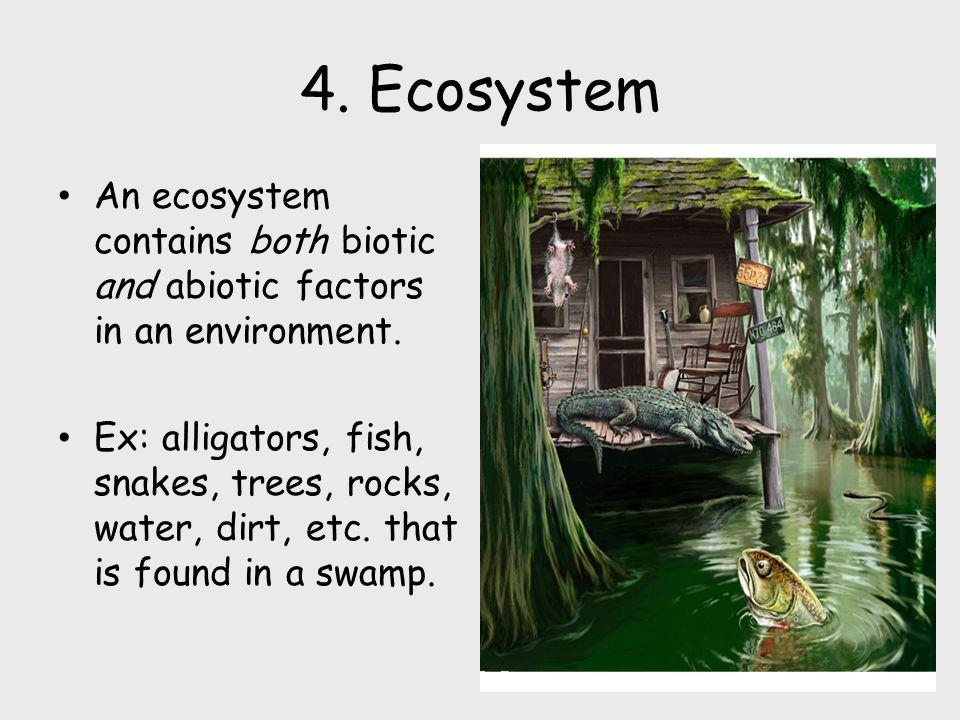 4.Ecosystem An ecosystem contains both biotic and abiotic factors in an environment.