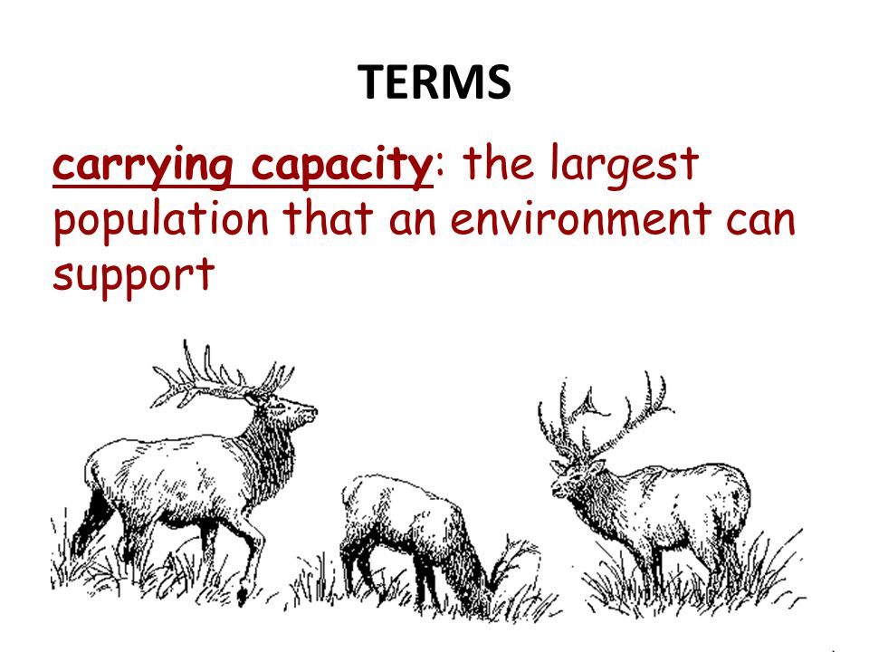 TERMS carrying capacity: the largest population that an environment can support