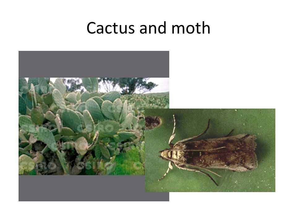 Cactus and moth