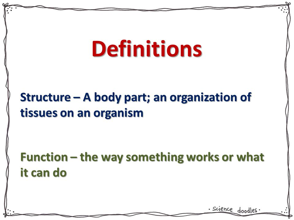 Definitions Structure – A body part; an organization of tissues on an organism Function – the way something works or what it can do