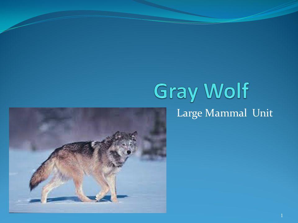Large Mammal Unit 1