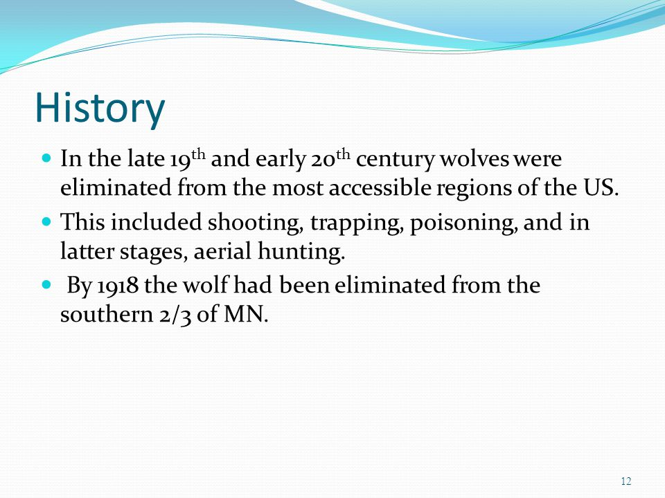 History In the late 19 th and early 20 th century wolves were eliminated from the most accessible regions of the US. This included shooting, trapping,