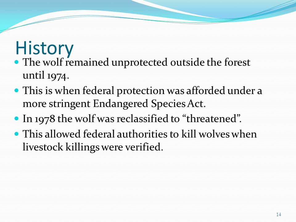 History The wolf remained unprotected outside the forest until 1974. This is when federal protection was afforded under a more stringent Endangered Sp