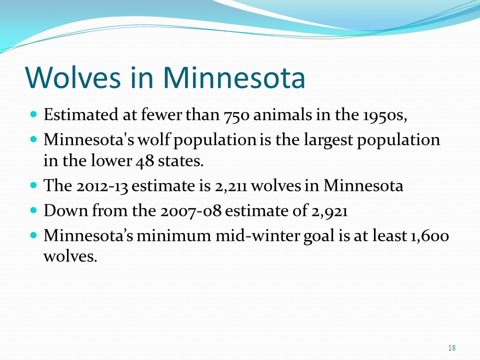 Wolves in Minnesota Estimated at fewer than 750 animals in the 1950s, Minnesota s wolf population is the largest population in the lower 48 states.