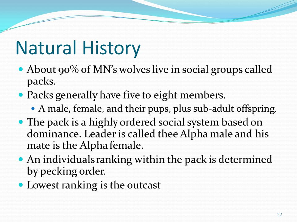 Natural History About 90% of MN's wolves live in social groups called packs.