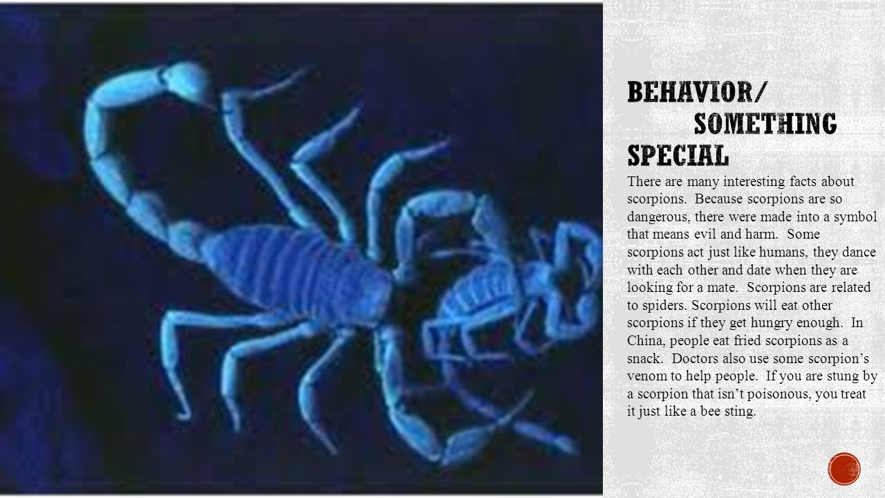 There are many interesting facts about scorpions.