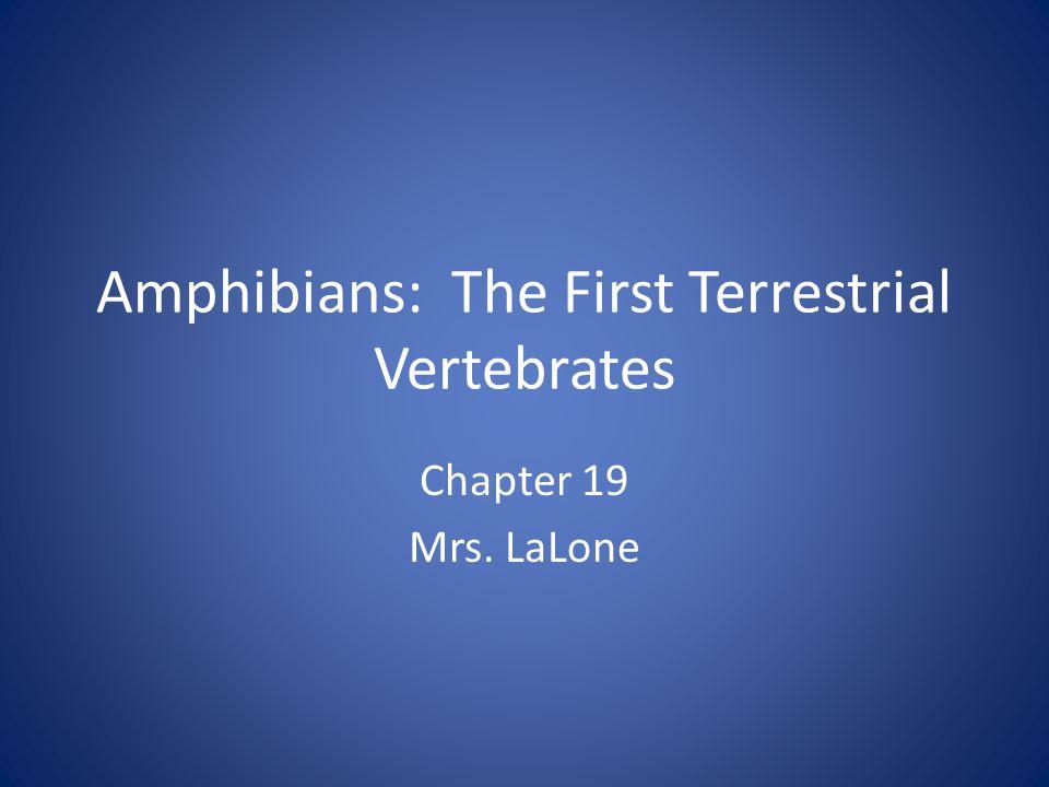 Amphibians: The First Terrestrial Vertebrates Chapter 19 Mrs. LaLone