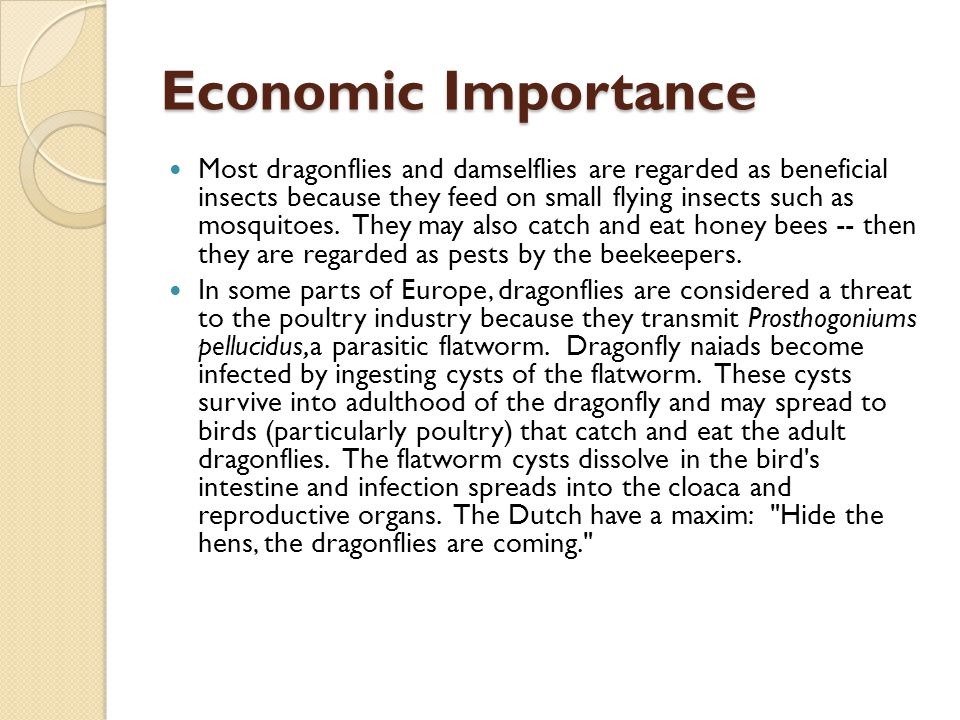 Economic Importance In some parts of Europe, dragonflies are considered a threat to the poultry industry because they transmit Prosthogoniums pellucidus,a parasitic flatworm.