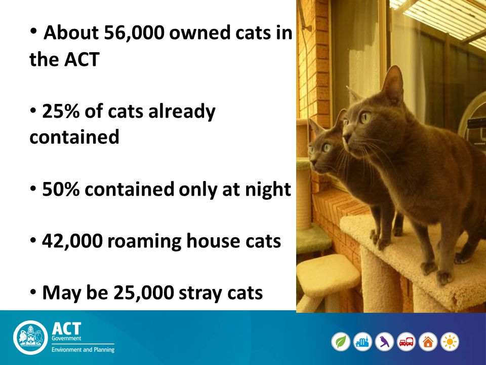 About 56,000 owned cats in the ACT 25% of cats already contained 50% contained only at night 42,000 roaming house cats May be 25,000 stray cats