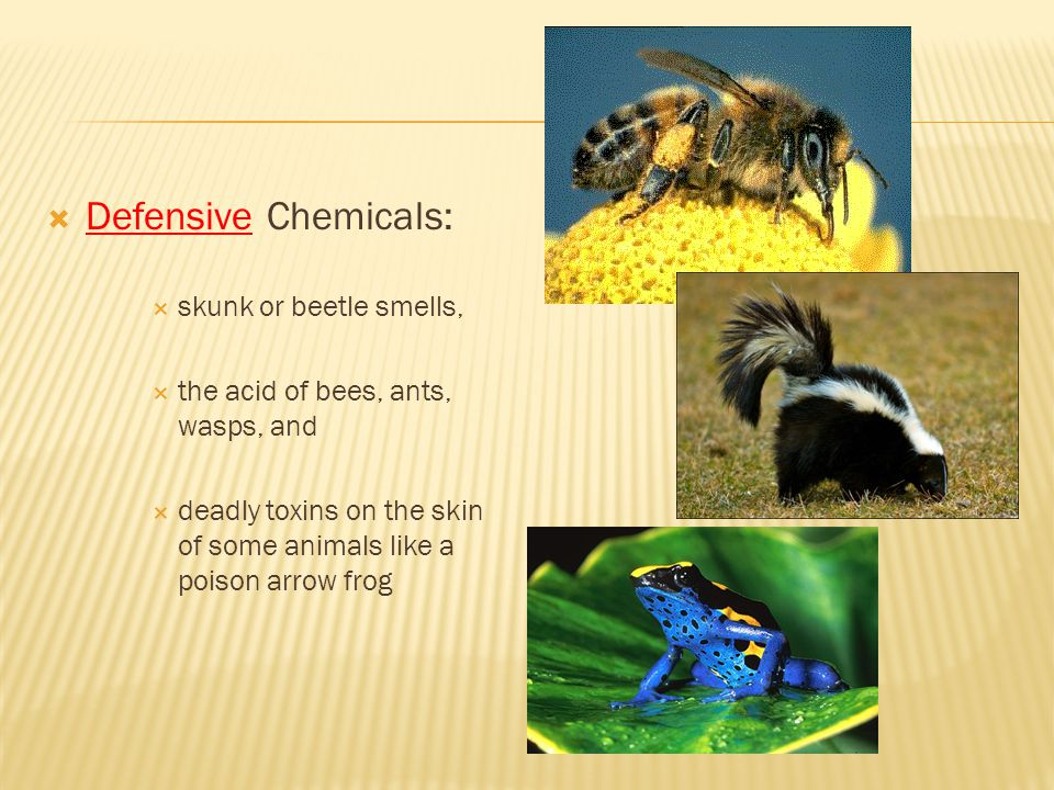  Defensive Chemicals:  skunk or beetle smells,  the acid of bees, ants, wasps, and  deadly toxins on the skin of some animals like a poison arrow frog