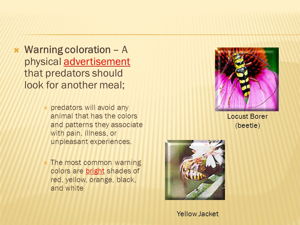  Warning coloration – A physical advertisement that predators should look for another meal;  predators will avoid any animal that has the colors and patterns they associate with pain, illness, or unpleasant experiences.