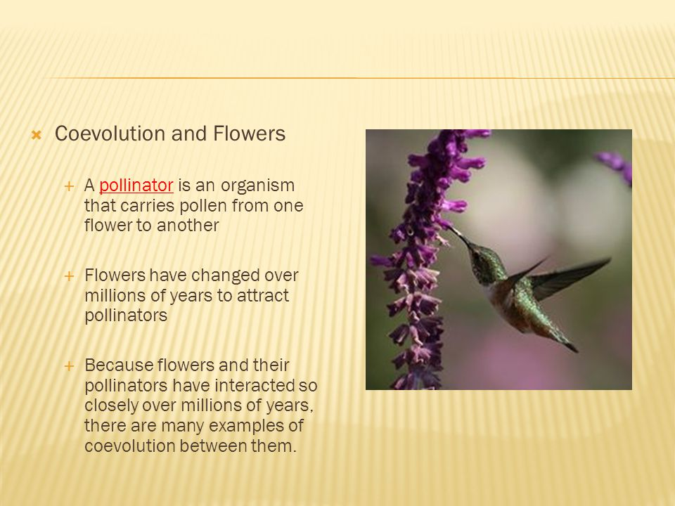  Coevolution and Flowers  A pollinator is an organism that carries pollen from one flower to another  Flowers have changed over millions of years to attract pollinators  Because flowers and their pollinators have interacted so closely over millions of years, there are many examples of coevolution between them.