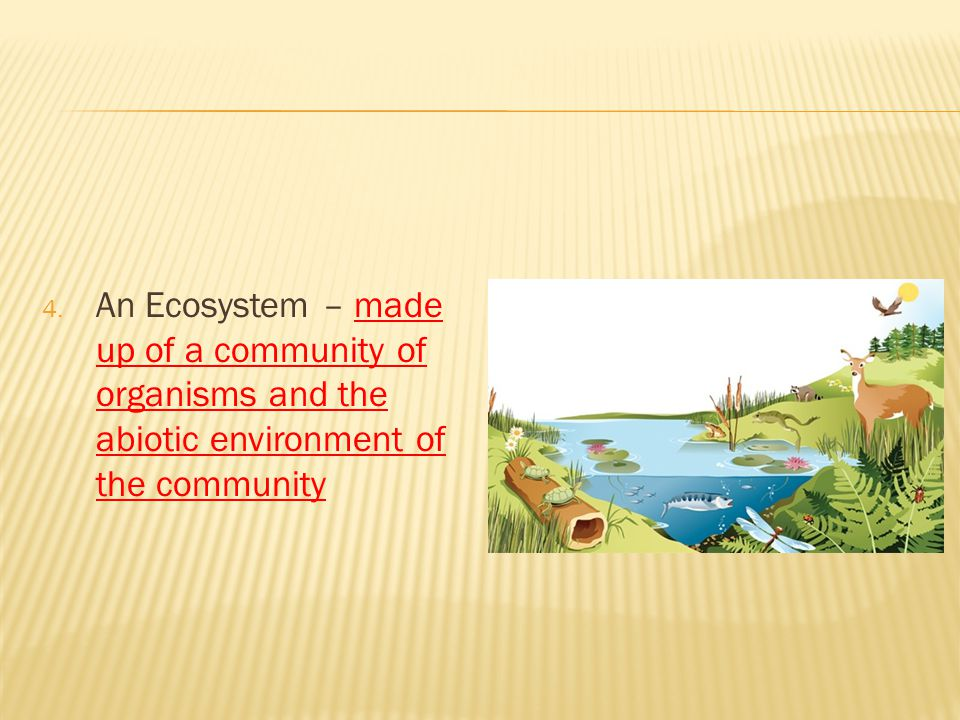 4. An Ecosystem – made up of a community of organisms and the abiotic environment of the community