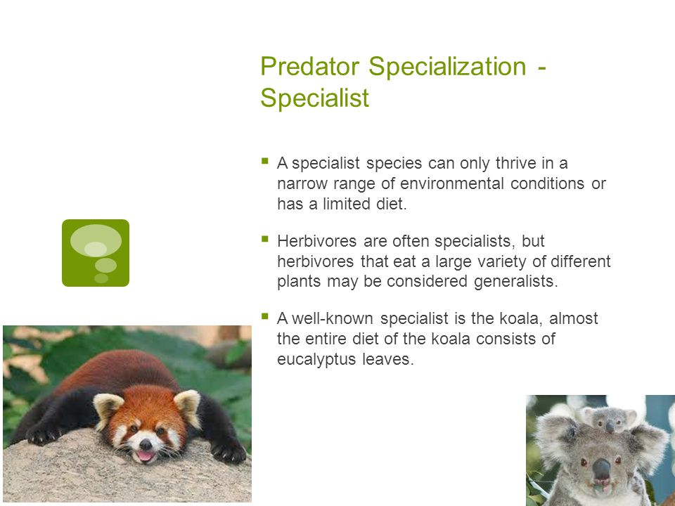 Predator Specialization - Specialist  A specialist species can only thrive in a narrow range of environmental conditions or has a limited diet.  Her