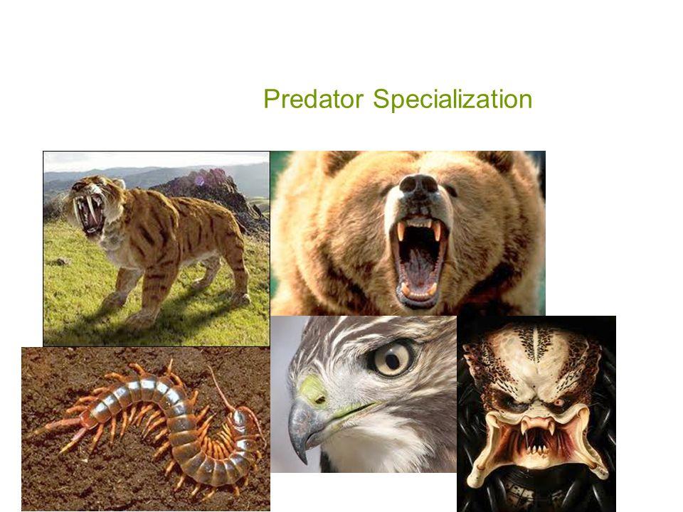 Predator Specialization