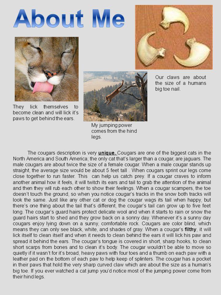 The cougars description is very unique.