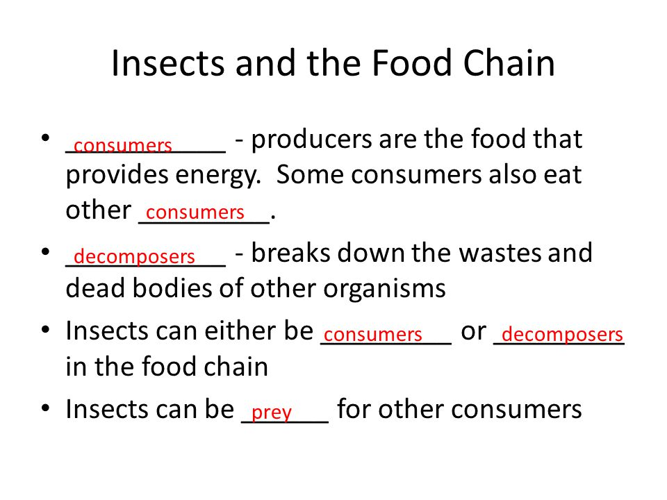 Insects and the Food Chain ___________ - producers are the food that provides energy. Some consumers also eat other _________. ___________ - breaks do