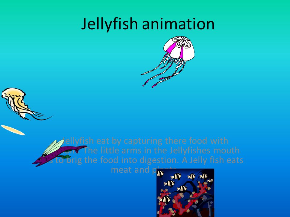Jellyfish animation Jellyfish eat by capturing there food with venom. The little arms in the Jellyfishes mouth is to brig the food into digestion. A J