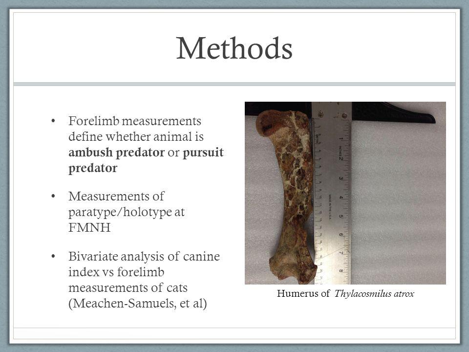 PAW Smilodon fatalis Canine Index