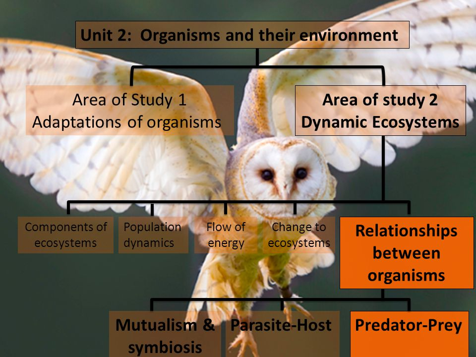 Unit 2: Organisms and their environment Area of Study 1 Adaptations of organisms Area of study 2 Dynamic Ecosystems Relationships between organisms Components of ecosystems Flow of energy Population dynamics Change to ecosystems Mutualism & symbiosis Predator-Prey Parasite-Host