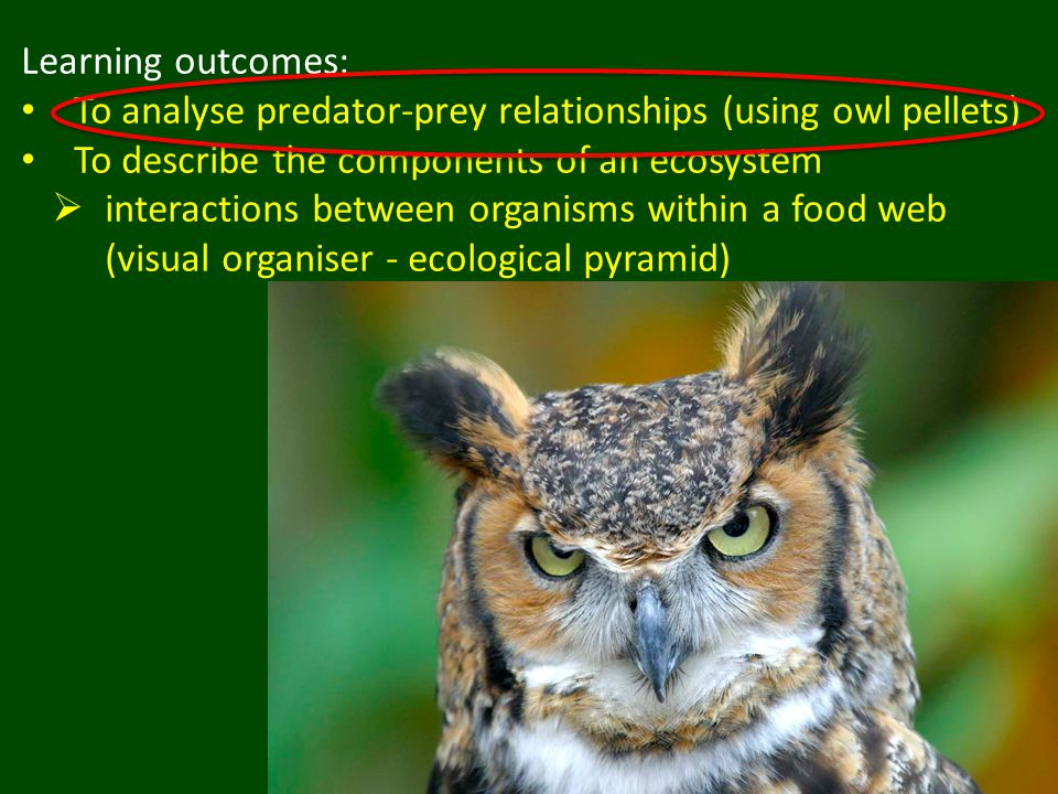 Learning outcomes: To analyse predator-prey relationships (using owl pellets) To describe the components of an ecosystem  interactions between organisms within a food web (visual organiser - ecological pyramid)