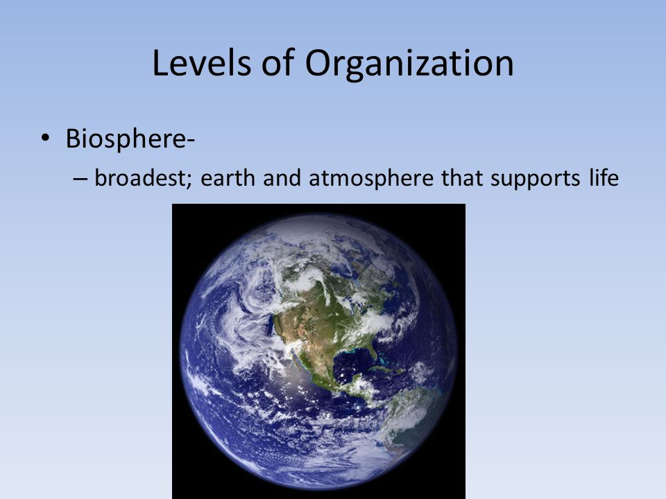 Levels of Organization Ecosystem- – all of the organisms and nonliving environment found in a particular place